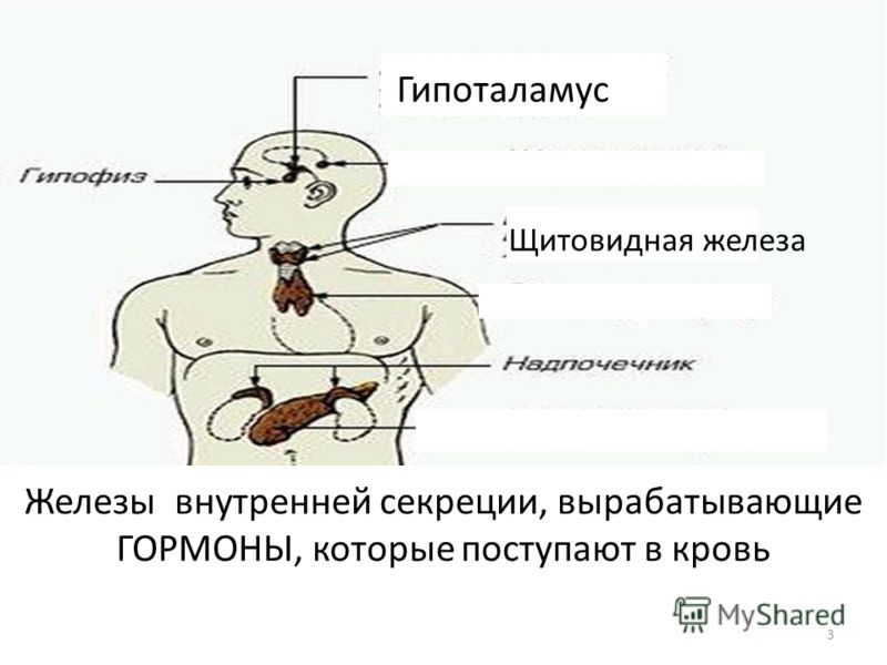 Гипоталамус Щитовидная железа Железы внутренней секреции, вырабатывающие ГОРМОНЫ, которые поступают в кровь 3