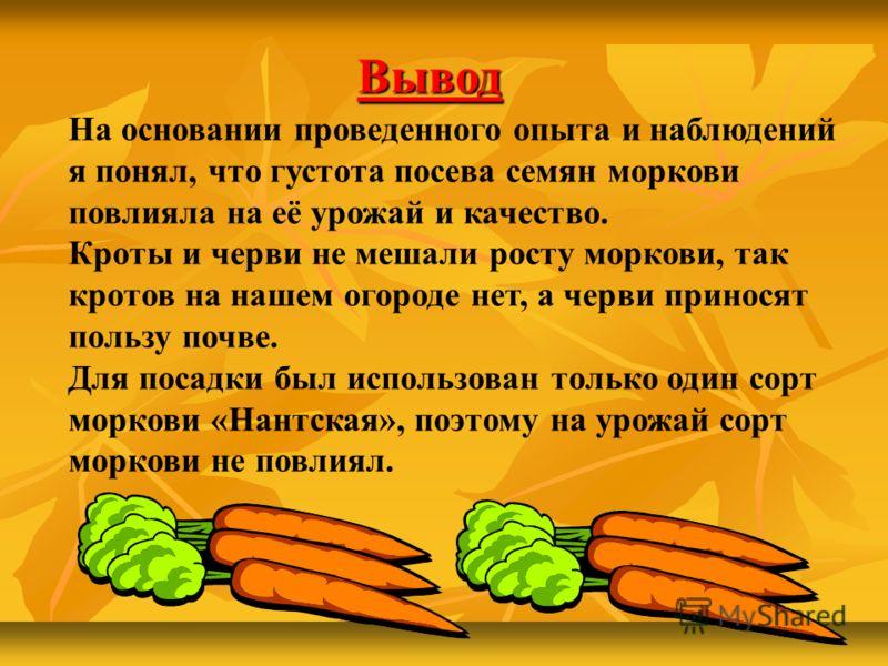 На основании проведенного опыта и наблюдений я понял, что густота посева семян моркови повлияла на её урожай и качество. Кроты и черви не мешали росту моркови, так кротов на нашем огороде нет, а черви приносят пользу почве. Для посадки был использова