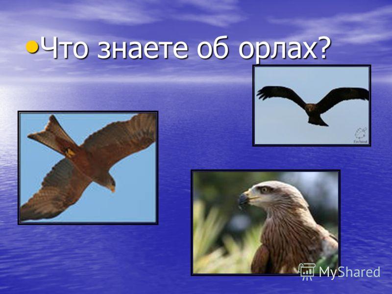 Что знаете об орлах? Что знаете об орлах?