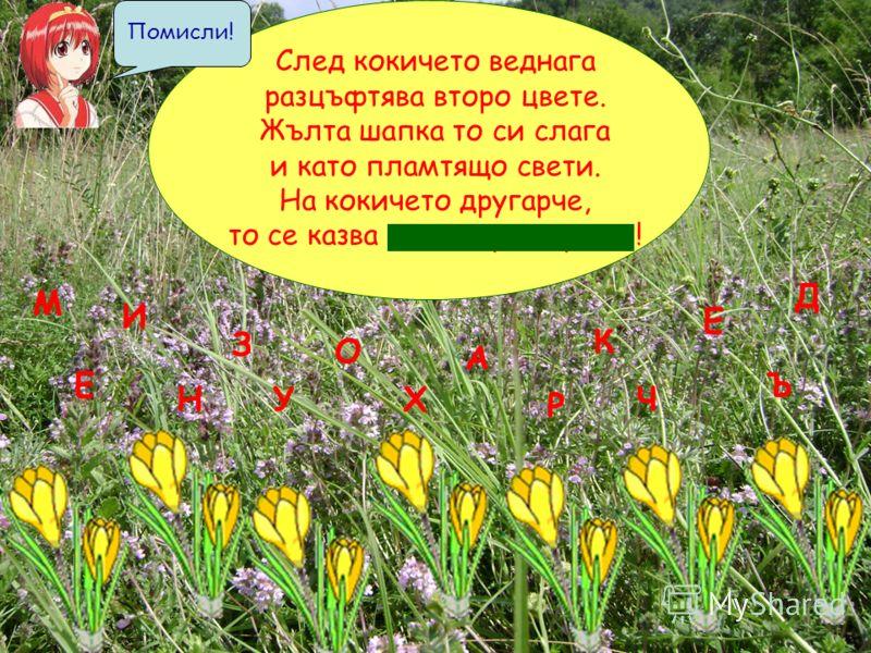 След кокичето веднага разцъфтява второ цвете. Жълта шапка то си слага и като пламтящо свети. На кокичето другарче, то се казва м и н з у х а р ч е ! М Н З Х Р А У И Ч Е О Е К Ъ Д Помисли!
