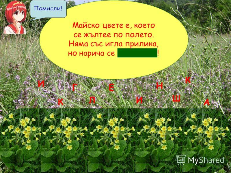 Майско цвете е, което се жълтее по полето. Няма със игла прилика, но нарича се и г л и к а ! Л К Е Н Ш И И А К Г Помисли!