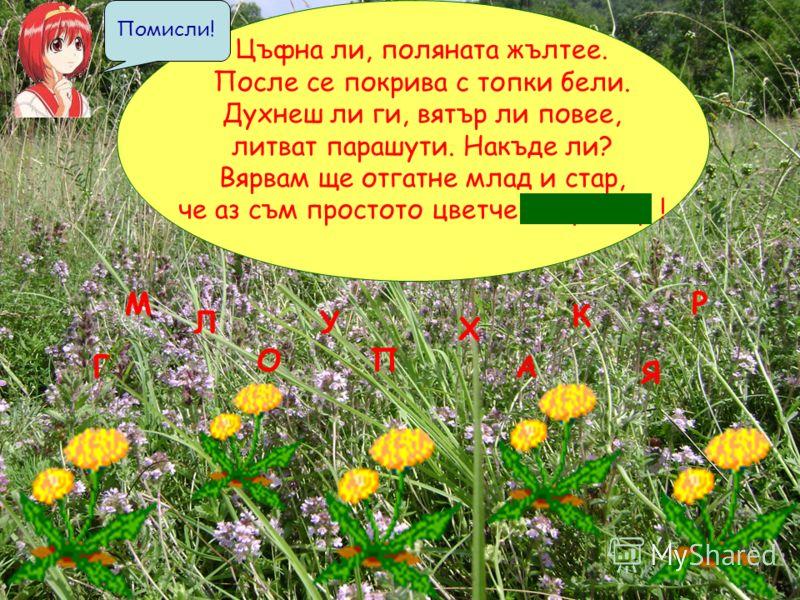 Цъфна ли, поляната жълтее. После се покрива с топки бели. Духнеш ли ги, вятър ли повее, литват парашути. Накъде ли? Вярвам ще отгатне млад и стар, че аз съм простото цветче г л у х а р ! ЛУ Г Х А Р ПО М Я К Помисли!