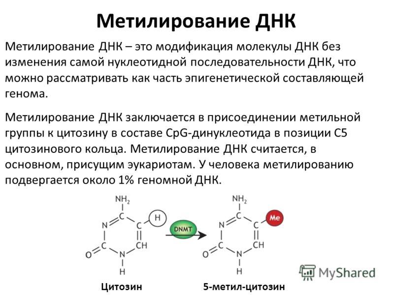 Метилирование ДНК – это модификация молекулы ДНК без изменения самой нуклеотидной последовательности ДНК, что можно рассматривать как часть эпигенетической составляющей генома. Метилирование ДНК заключается в присоединении метильной группы к цитозину