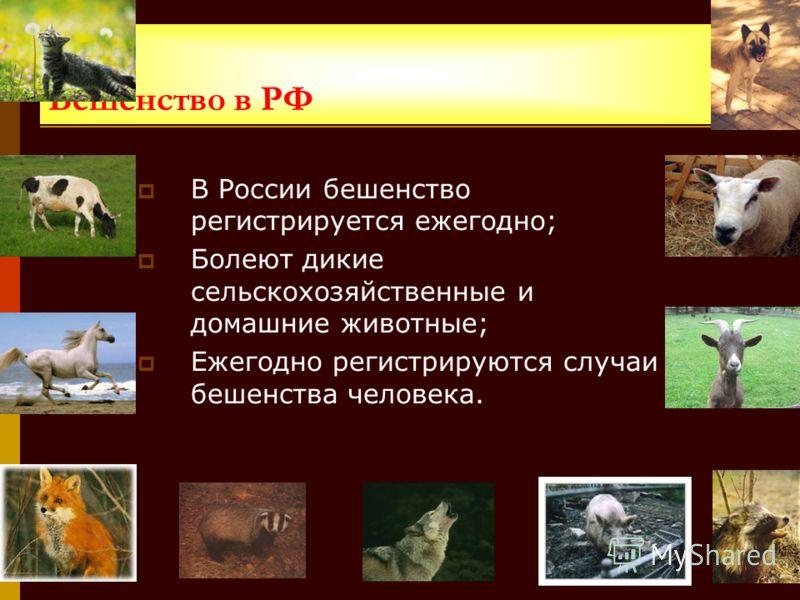 Бешенство в РФ В России бешенство регистрируется ежегодно; Болеют дикие сельскохозяйственные и домашние животные; Ежегодно регистрируются случаи бешенства человека.