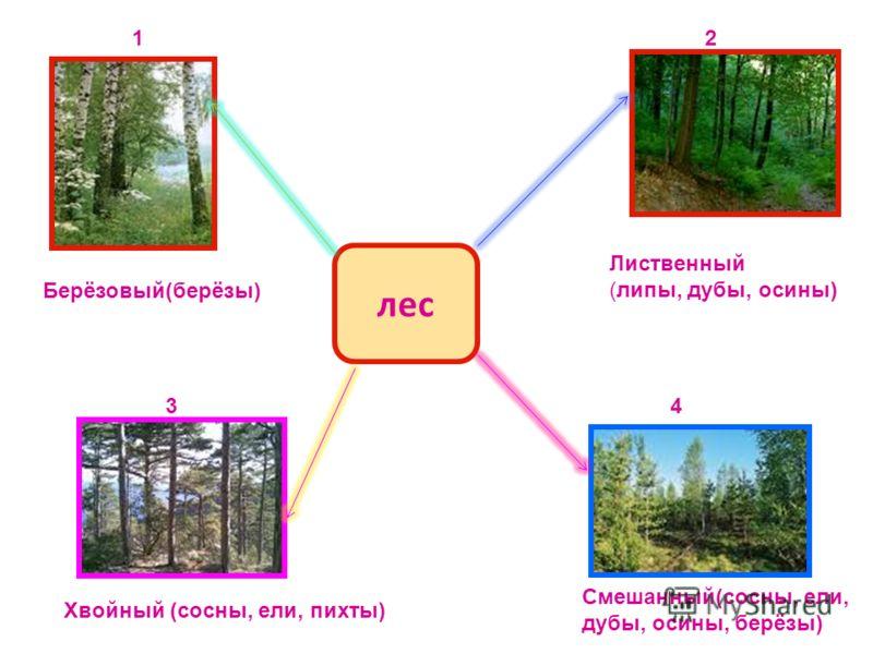 лес 12 34 Берёзовый(берёзы) Лиственный (липы, дубы, осины) Хвойный (сосны, ели, пихты) Смешанный(сосны, ели, дубы, осины, берёзы)