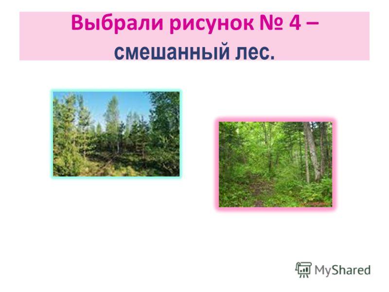Выбрали рисунок 4 – смешанный лес.