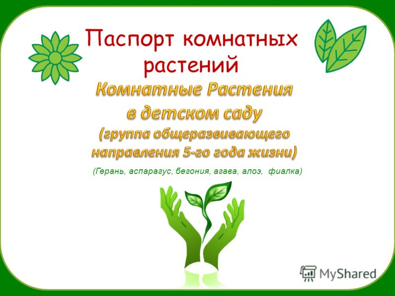 Паспорт комнатных растений (Герань, аспарагус, бегония, агава, алоэ, фиалка)
