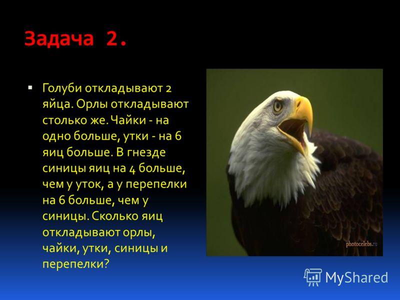 Задача 2. Голуби откладывают 2 яйца. Орлы откладывают столько же. Чайки - на одно больше, утки - на 6 яиц больше. В гнезде синицы яиц на 4 больше, чем у уток, а у перепелки на 6 больше, чем у синицы. Сколько яиц откладывают орлы, чайки, утки, синицы