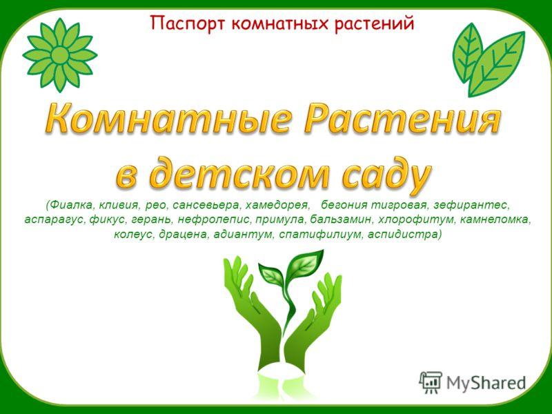 Паспорт комнатных растений (Фиалка, кливия, рео, сансевьера, хамедорея, бегония тигровая, зефирантес, аспарагус, фикус, герань, нефролепис, примула, бальзамин, хлорофитум, камнеломка, колеус, драцена, адиантум, спатифилиум, аспидистра)