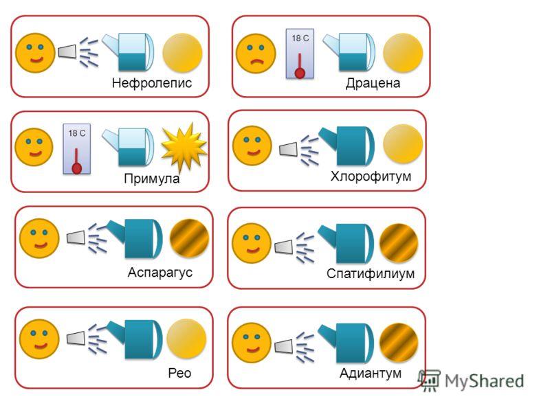 Аспарагус Нефролепис Примула 18 С Драцена 18 С Хлорофитум Спатифилиум Адиантум Рео