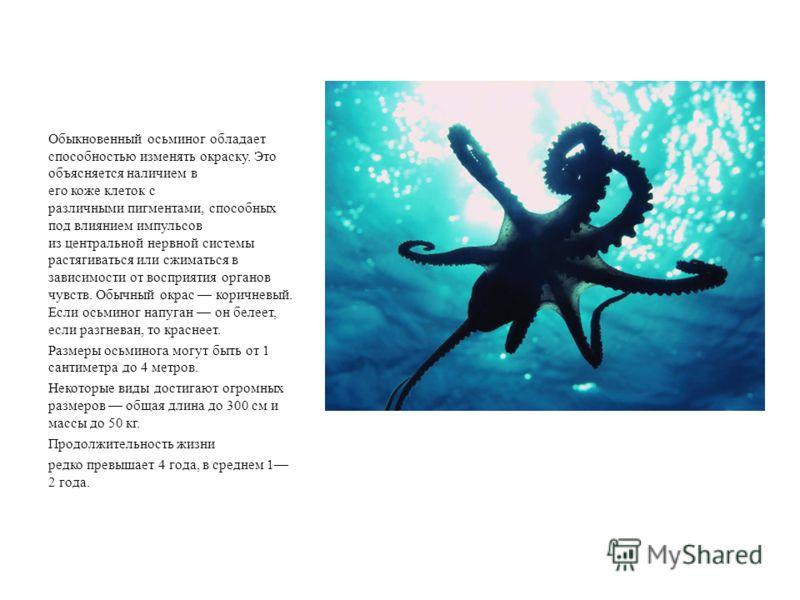 Обыкновенный осьминог обладает способностью изменять окраску. Это объясняется наличием в его коже клеток с различными пигментами, способных под влиянием импульсов из центральной нервной системы растягиваться или сжиматься в зависимости от восприятия