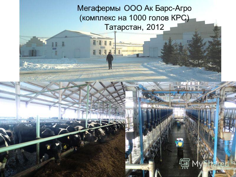 Мегафермы ООО Ак Барс-Агро (комплекс на 1000 голов КРС) Татарстан, 2012