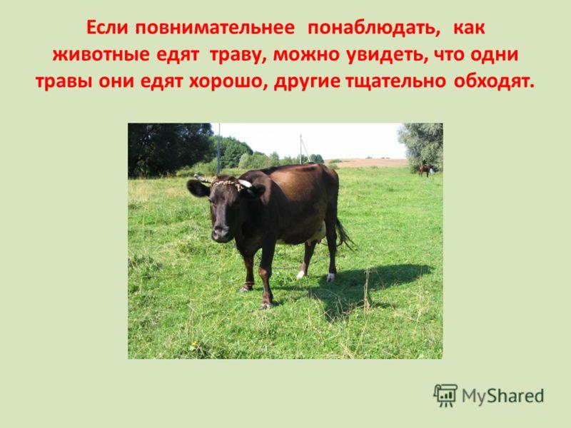 Если повнимательнее понаблюдать, как животные едят траву, можно увидеть, что одни травы они едят хорошо, другие тщательно обходят.