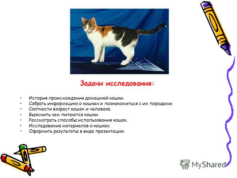 Задачи исследования: История происхождения домашней кошки. Собрать информацию о кошках и познакомиться с их породами. Соотнести возраст кошек и человека. Выяснить чем питаются кошки. Рассмотреть способы использования кошек. Исследование материалов о