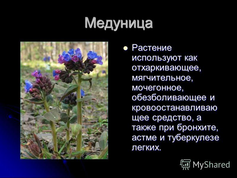 Медуница Растение используют как отхаркивающее, мягчительное, мочегонное, обезболивающее и кровоостанавливаю щее средство, а также при бронхите, астме и туберкулезе легких. Растение используют как отхаркивающее, мягчительное, мочегонное, обезболивающ