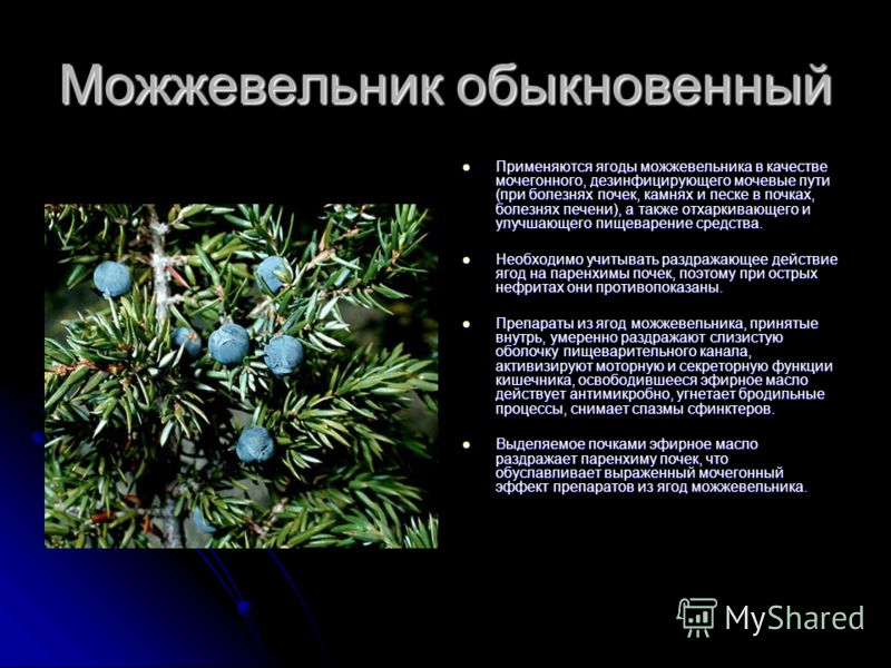 Можжевельник обыкновенный Применяются ягоды можжевельника в качестве мочегонного, дезинфицирующего мочевые пути (при болезнях почек, камнях и песке в почках, болезнях печени), а также отхаркивающего и улучшающего пищеварение средства. Применяются яго