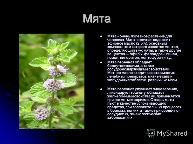 Мята Мята - очень полезное растение для человека. Мята перечная содержит эфирное масло (2,5%), основным компонентом которого является ментол, определяющий вкус мяты, а также другие вещества эфиры, феландрен, пинен, ясмон, пиперитон, ментофуран и т.д.