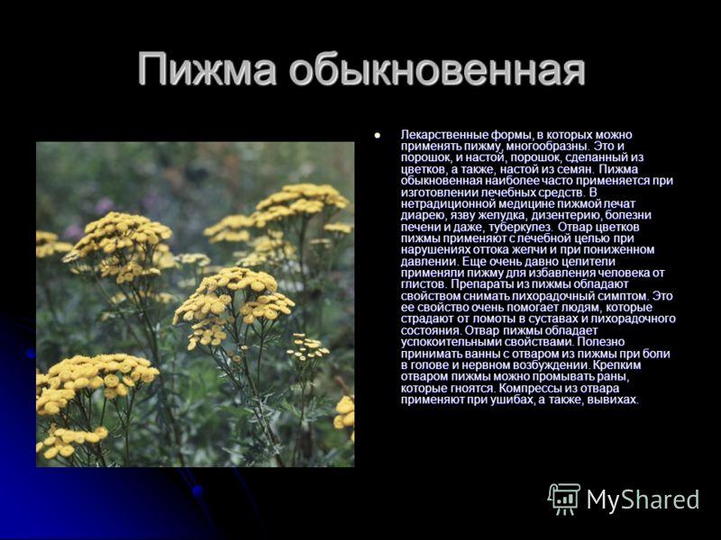 Пижма обыкновенная Лекарственные формы, в которых можно применять пижму, многообразны. Это и порошок, и настой, порошок, сделанный из цветков, а также, настой из семян. Пижма обыкновенная наиболее часто применяется при изготовлении лечебных средств.