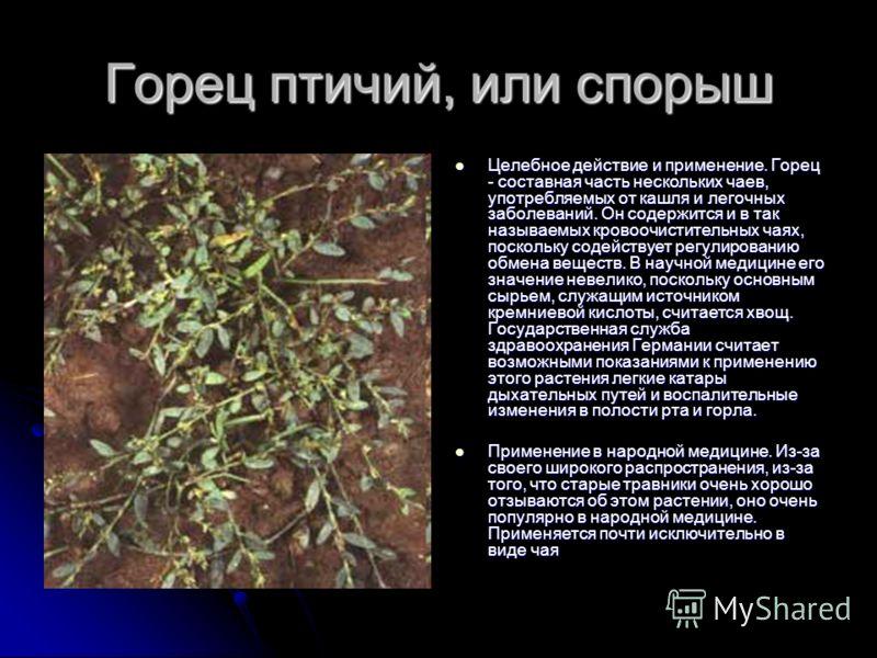 Горец птичий, или спорыш Целебное действие и применение. Горец - составная часть нескольких чаев, употребляемых от кашля и легочных заболеваний. Он содержится и в так называемых кровоочистительных чаях, поскольку содействует регулированию обмена веще