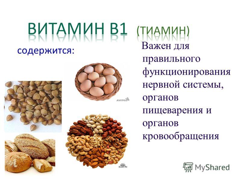 содержится: Важен для правильного функционирования нервной системы, органов пищеварения и органов кровообращения