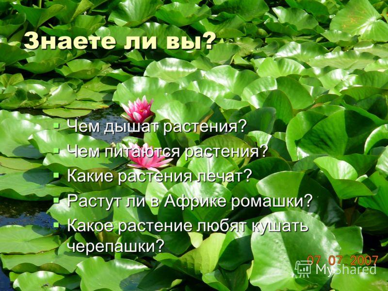 Знаете ли вы? Чем дышат растения? Чем дышат растения? Чем питаются растения? Чем питаются растения? Какие растения лечат? Какие растения лечат? Растут ли в Африке ромашки? Растут ли в Африке ромашки? Какое растение любят кушать черепашки? Какое расте
