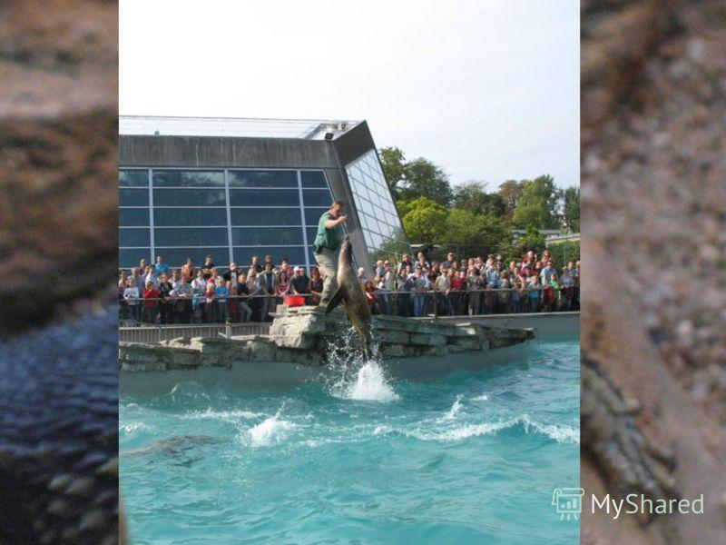 А на выходных я со своей семьей был в техническом музее Sinsheim и в зоопарке Wilhelma.