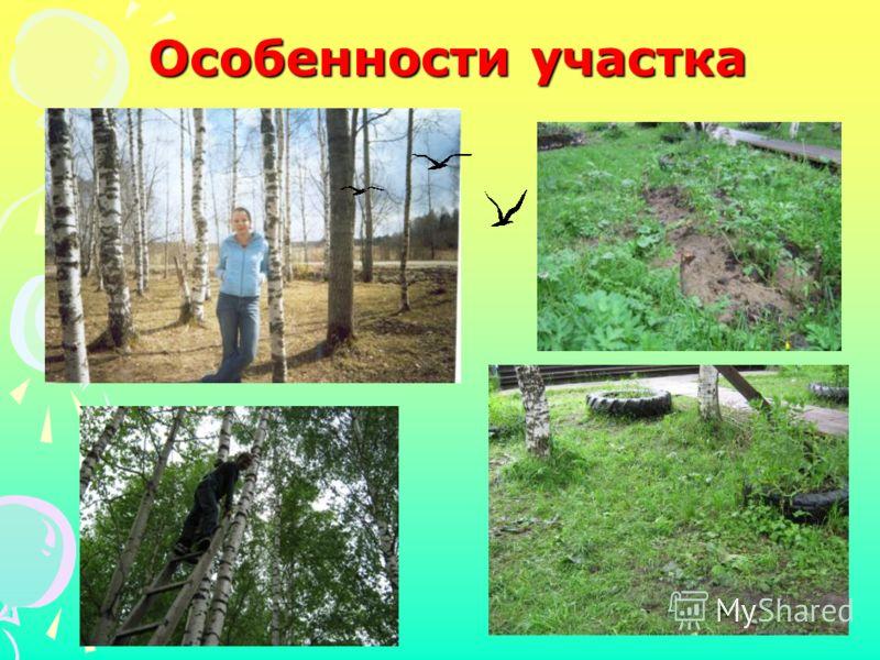 Особенности участка Нет места для цветников Клумбы неухоженные, заросшие травой Почва глинистая, затянутая корнями деревьев Участок затенён разросшимися деревьями