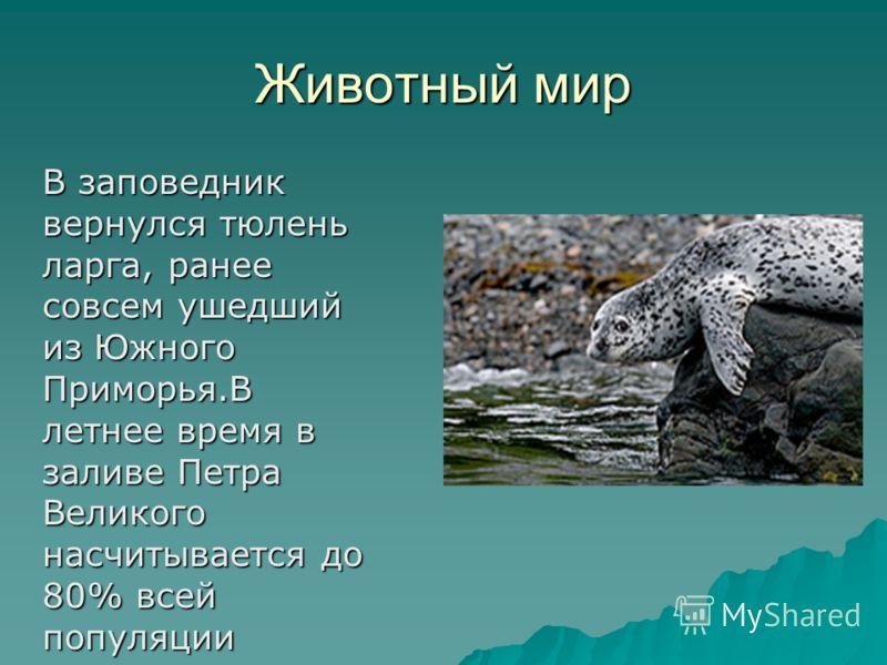 Животный мир В заповедник вернулся тюлень ларга, ранее совсем ушедший из Южного Приморья.В летнее время в заливе Петра Великого насчитывается до 80% всей популяции В заповедник вернулся тюлень ларга, ранее совсем ушедший из Южного Приморья.В летнее в
