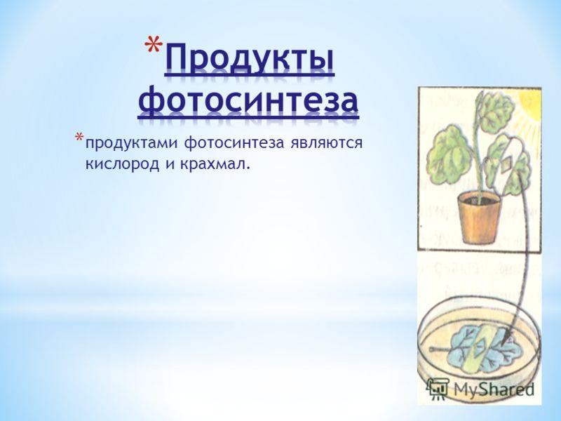 * продуктами фотосинтеза являются кислород и крахмал.
