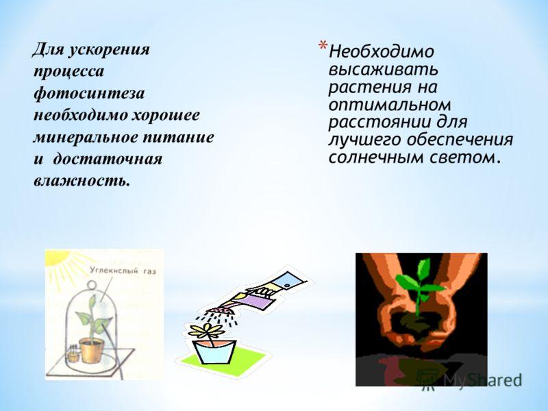 * Необходимо высаживать растения на оптимальном расстоянии для лучшего обеспечения солнечным светом. Для ускорения процесса фотосинтеза необходимо хорошее минеральное питание и достаточная влажность.
