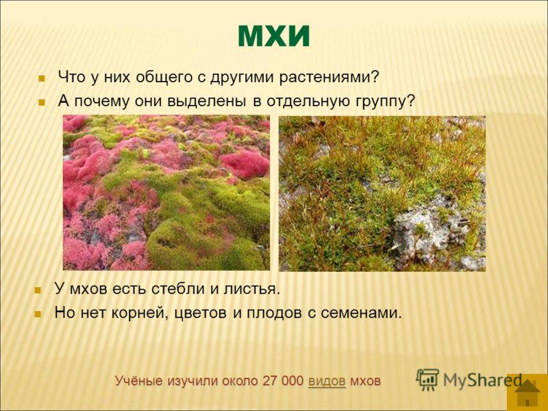 МХИ Что у них общего с другими растениями? А почему они выделены в отдельную группу? У мхов есть стебли и листья. Но нет корней, цветов и плодов с семенами. Учёные изучили около 27 000 в в в в в ииии дддд оооо вввв мхов