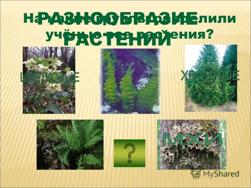 РАЗНООБРАЗИЕ РАСТЕНИЙ На какие группы разделили учёные все растения?