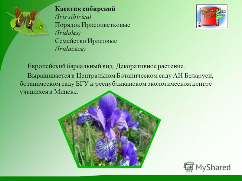Касатик сибирский (Iris sibirica) Порядок Ирисоцветковые (Iridales) Семейство Ирисовые (Iridaceae) Европейский бареальный вид. Декоративное растение. Выращивается в Центральном Ботаническом саду АН Беларуси, ботаническом саду БГУ и республиканском эк