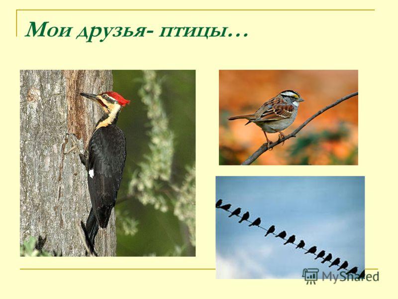 Мои друзья- птицы…