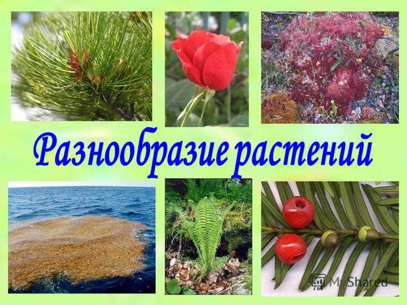 Низшие растения высшие растения