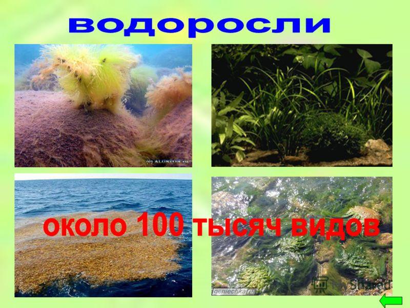 Растения Низшие и Высшие примеры