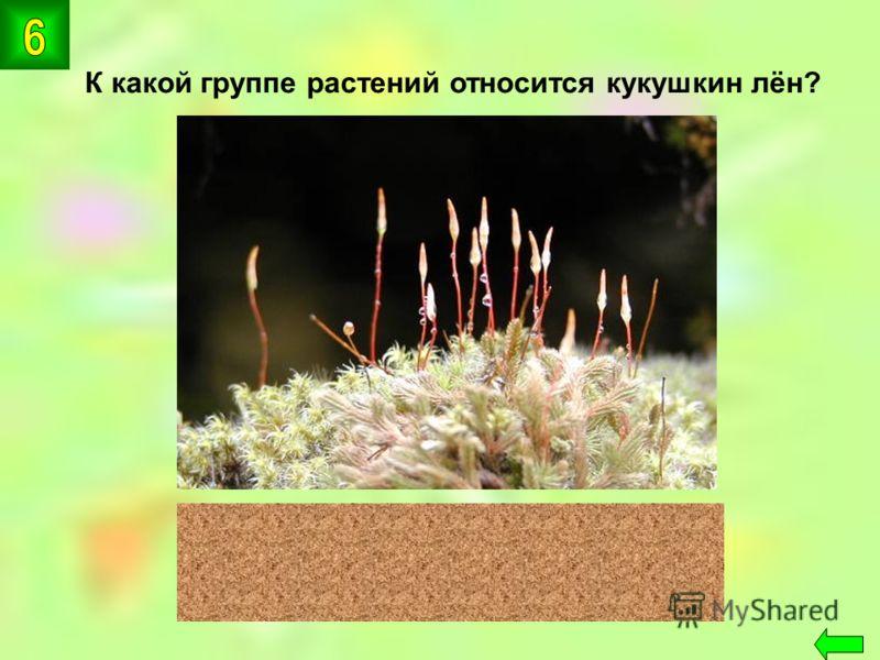 К какой группе растений относится кукушкин лён? мхи