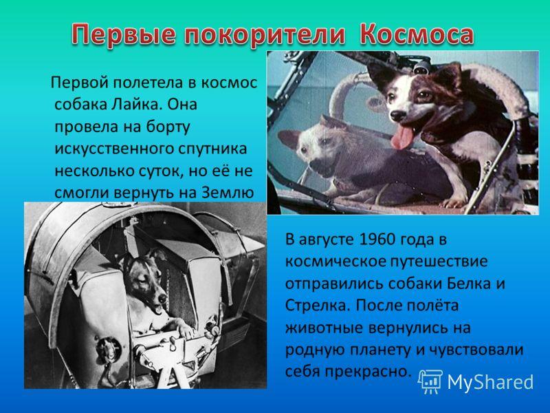 Первой полетела в космос собака Лайка. Она провела на борту искусственного спутника несколько суток, но её не смогли вернуть на Землю В августе 1960 года в космическое путешествие отправились собаки Белка и Стрелка. После полёта животные вернулись на