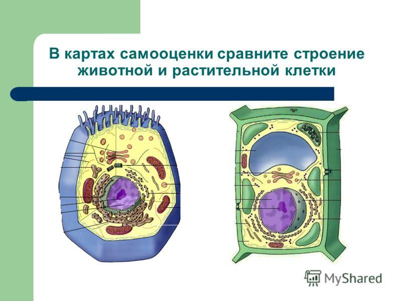 3 этап урока. Определите о чём идёт речь? Органоиды, клетки, ткани, органы, организмы - ?