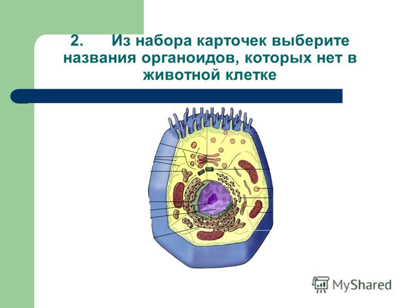 1.Проставьте номера названий органоидов в картах самооценки