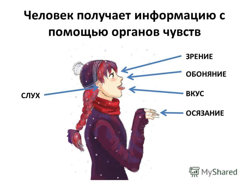Человек получает информацию с помощью органов чувств ЗРЕНИЕ СЛУХ ОБОНЯНИЕ ОСЯЗАНИЕ ВКУС