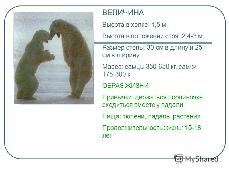 ВЕЛИЧИНА Высота в холке: 1,5 м. Высота в положении стоя: 2,4-3 м. Размер стопы: 30 см в длину и 25 см в ширину Масса: самцы 350-650 кг, самки 175-300 кг. ОБРАЗ ЖИЗНИ Привычки: держаться поодиночке; сходиться вместе у падали. Пища: тюлени, падаль, рас