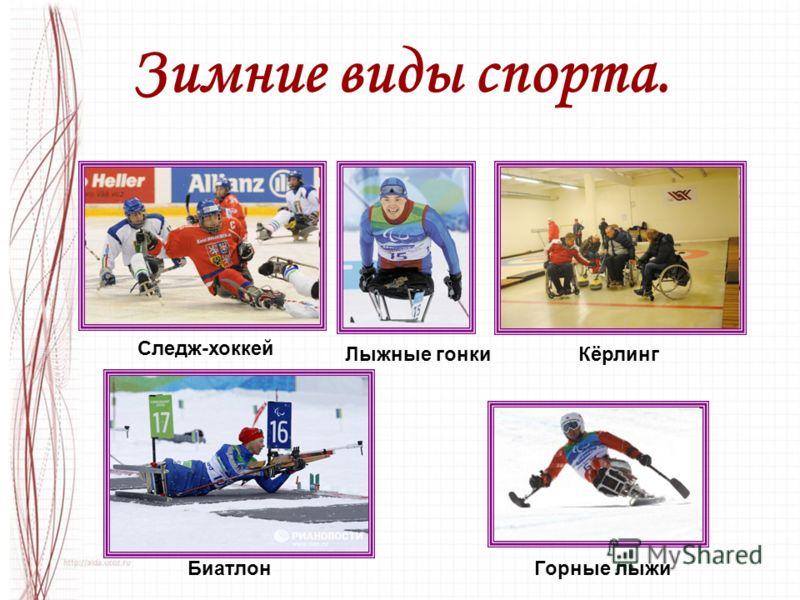 Зимние виды спорта. Лыжные гонки БиатлонГорные лыжи Кёрлинг Следж-хоккей