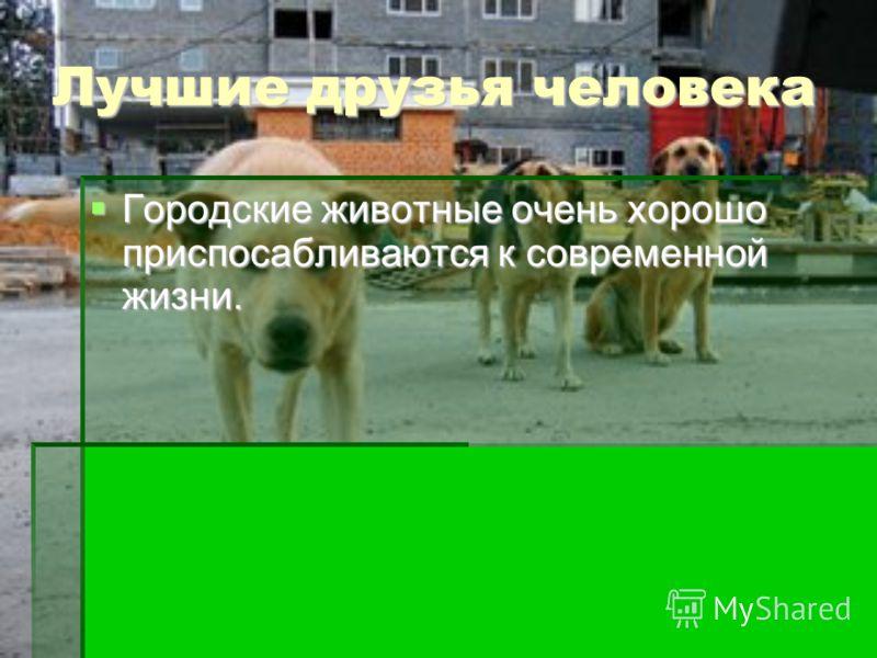 Лучшие друзья человека Городские животные очень хорошо приспосабливаются к современной жизни. Городские животные очень хорошо приспосабливаются к современной жизни.