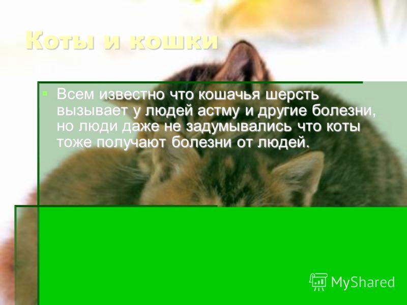 Коты и кошки Всем известно что кошачья шерсть вызывает у людей астму и другие болезни, но люди даже не задумывались что коты тоже получают болезни от людей. Всем известно что кошачья шерсть вызывает у людей астму и другие болезни, но люди даже не зад