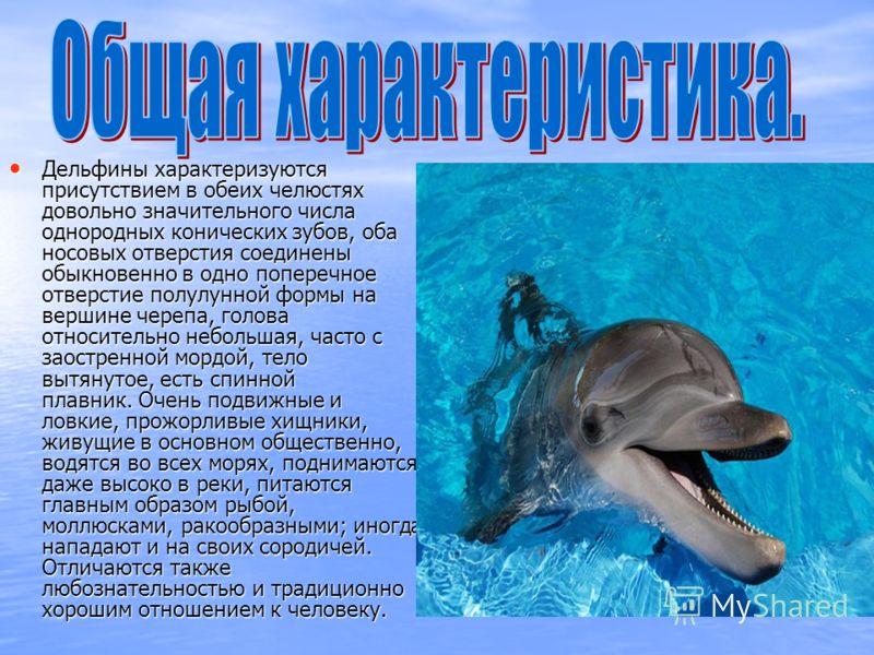 Дельфины характеризуются присутствием в обеих челюстях довольно значительного числа однородных конических зубов, оба носовых отверстия соединены обыкновенно в одно поперечное отверстие полулунной формы на вершине черепа, голова относительно небольшая