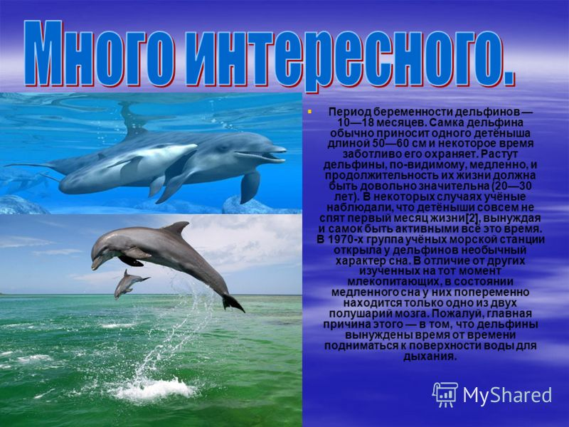 Период беременности дельфинов 1018 месяцев. Самка дельфина обычно приносит одного детёныша длиной 5060 см и некоторое время заботливо его охраняет. Растут дельфины, по-видимому, медленно, и продолжительность их жизни должна быть довольно значительна