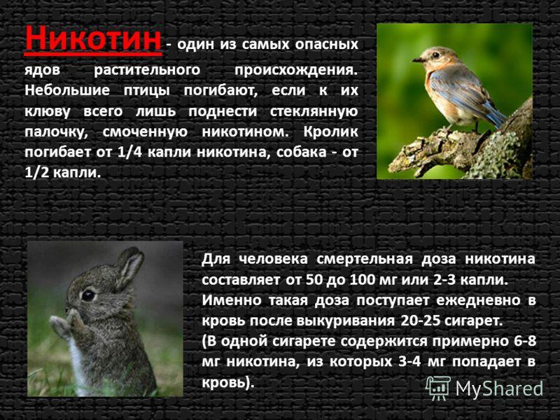 Никотин - один из самых опасных ядов растительного происхождения. Небольшие птицы погибают, если к их клюву всего лишь поднести стеклянную палочку, смоченную никотином. Кролик погибает от 1/4 капли никотина, собака - от 1/2 капли. Для человека смерте
