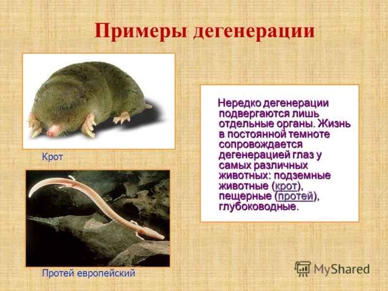 Нередко дегенерации подвергаются лишь отдельные органы. Жизнь в постоянной темноте сопровождается дегенерацией глаз у самых различных животных: подземные животные (крот), пещерные (протей), глубоководные. Нередко дегенерации подвергаются лишь отдельн