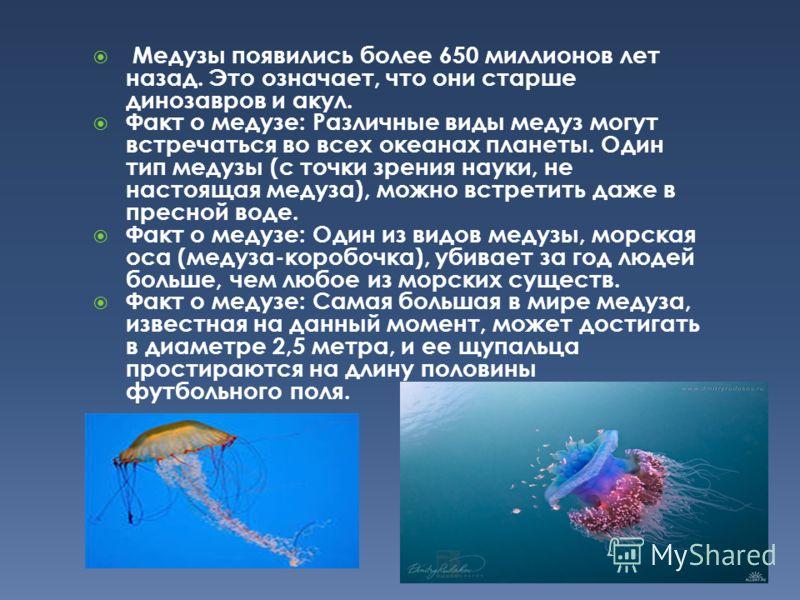 Медузы появились более 650 миллионов лет назад. Это означает, что они старше динозавров и акул. Факт о медузе: Различные виды медуз могут встречаться во всех океанах планеты. Один тип медузы (с точки зрения науки, не настоящая медуза), можно встретит